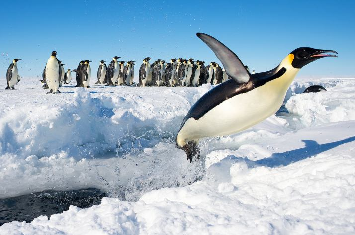 Antarctica-Bucket-List-6
